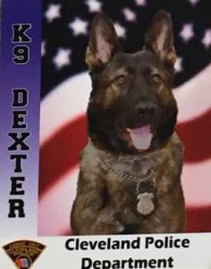 K-9 Dexter