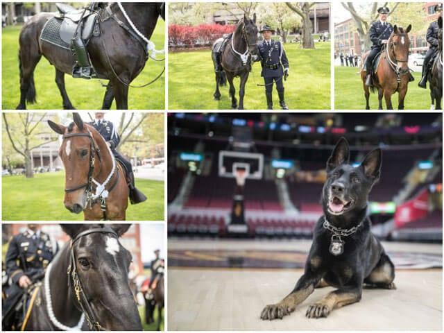 Dog and Pony Show Calendar